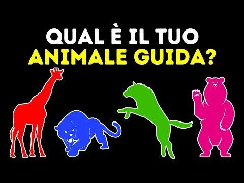 Qual è il tuo animale guida? Un fantastico test di personalità