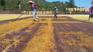 Los Niños Coffee Process Experiments (Irving Farm Exclusive)