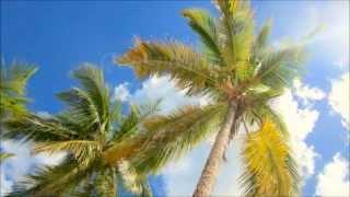 Caraïbes 2014 : le film - Salza19