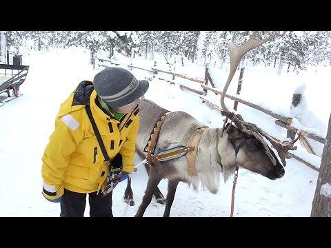 Drive A Fun Reindeer Open Sleigh in Saariselka, Finland