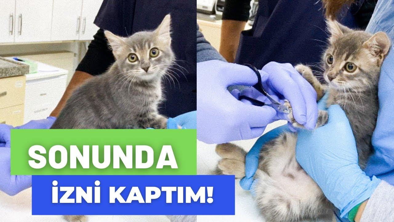 Kedi sahiplenecekler için gereken malzemeler, maliyetleri düşürmek için alternatifli seçeneklerle