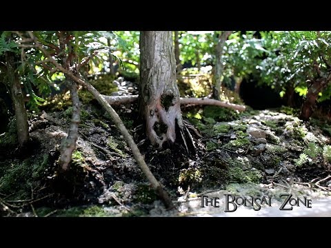 Avatar Grove, Bonsai Forest, Part 3, The Bonsai Zone, May 2018