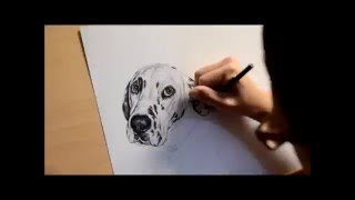 Dalmatian Speed Drawing