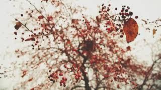 Природа России. Осень.