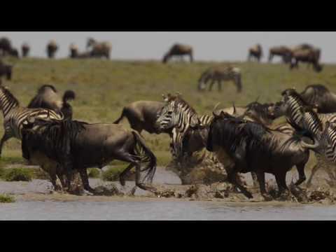 Safari Ndutu Tanzania February 2017