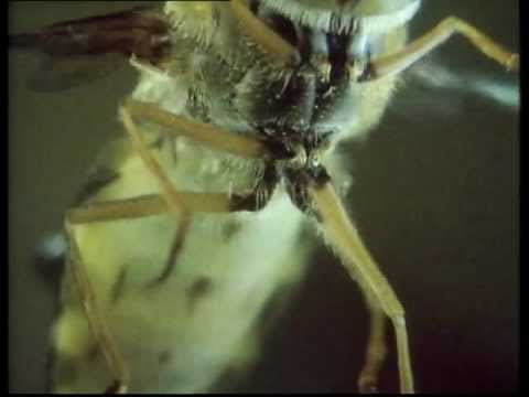 Life on Earth - e03 - Flight control in flies