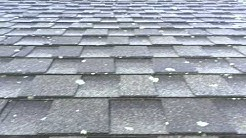Roof Cleaning- Lichen Removal From Asphalt Shingles