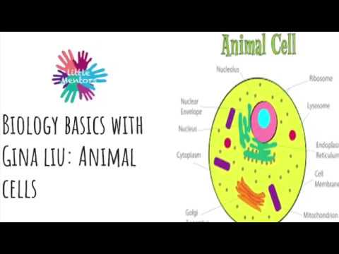 Little Mentors - Biology Basics (Animal Cells)