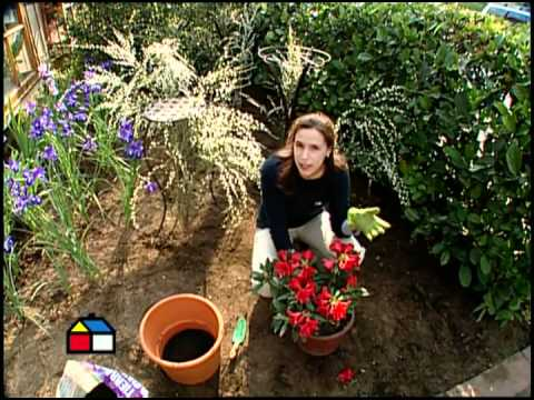 C mo hacer un antejard n frondoso y colorido youtube - Gravas para jardin ...