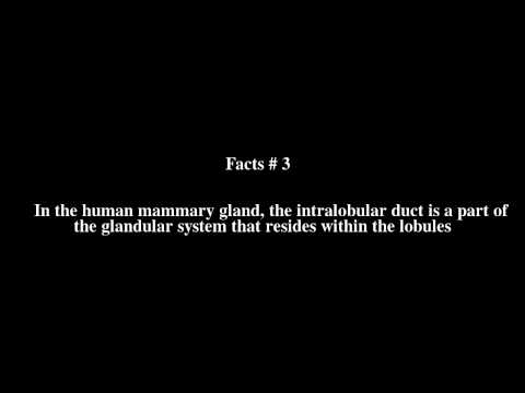 Intralobular duct Top # 5 Facts