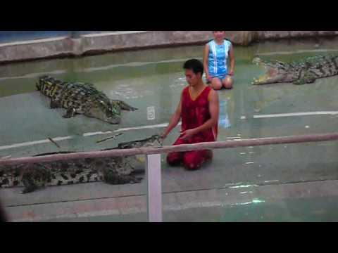 Biểu diễn cá sấu