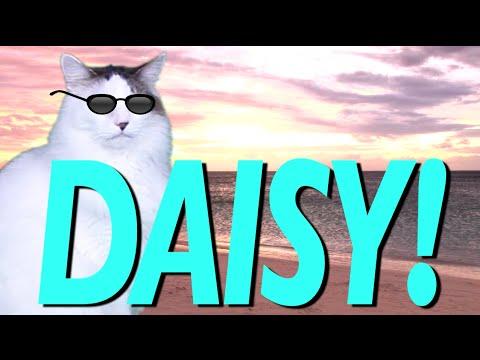 HAPPY BIRTHDAY DAISY! - EPIC CAT Happy Birthday Song