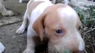 Puppies /  The first time out