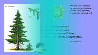 Презентация для детей.  Виды деревьев для дошкольников(Ролик тематические карточки сделан по методике Гленна Домана. Используя красочные картинки, с самого ранне..., 2015-08-31T06:30:01.000Z)