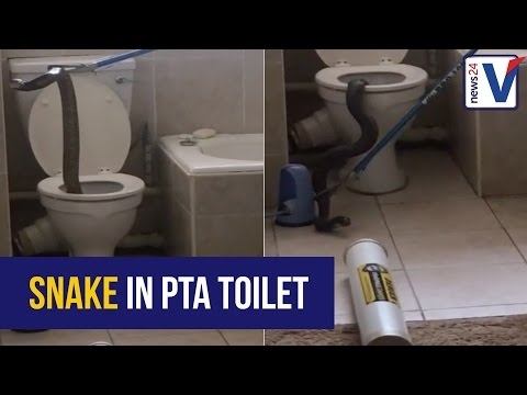 WATCH: Huge cobra on the loose in Pretoria apartment block's drainage system