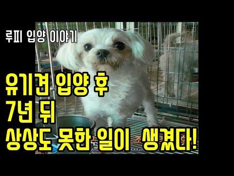 유기견 보호소에서 강아지 입양 후 7년뒤 상�