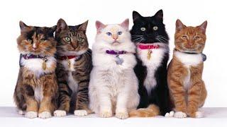 TOP 10 Unusual Cat Breeds
