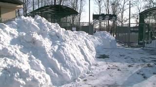 Медведи залегли в спячку на время снегопада(Сюжет телерадиоцентра