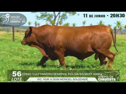 LOTE 56 CONQ 1167