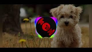مهرجان الكلاب ريمكس
