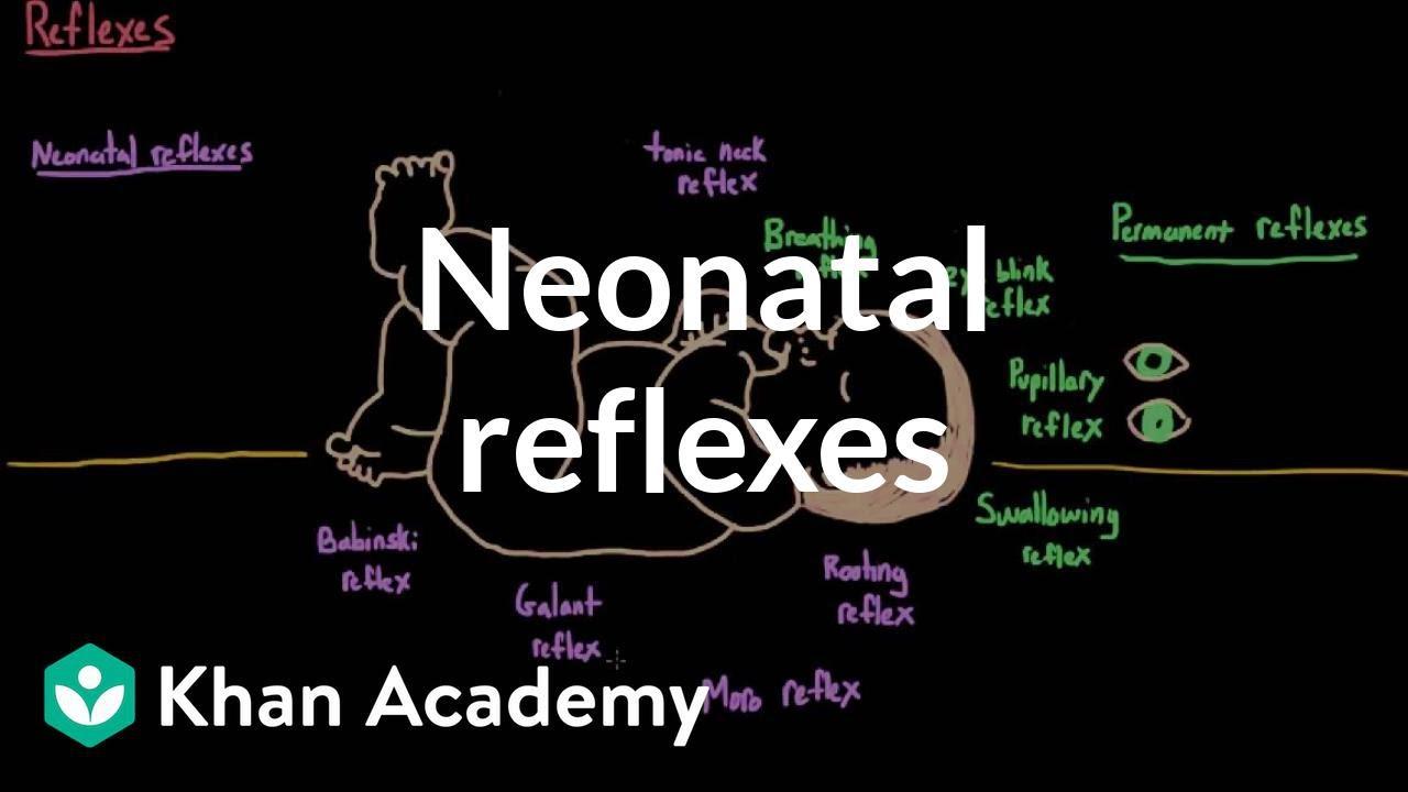 138e4a844809e Newborn Reflexes - RNpedia
