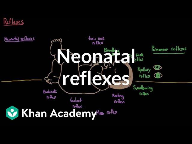 Neonatal reflexes | Behavior | MCAT | Khan Academy