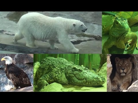 Все лучшие животные Московского зоопарка