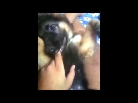 dog-k-puppy-ko-kaise...???