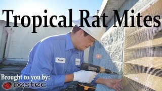 Pestec: How to Get Rid of Tropical Rat Mites