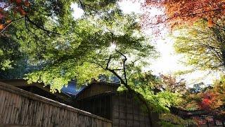 紅葉・黄葉便り2015 本土寺  Hondoji Temple・ Autumn Leaves