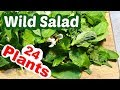 Foraging in My Yard: Wild Salad from 24 Plants of Late Spring & Early Summer