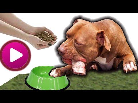 Como alimentar a perros de razas poderosas.(pitbull, rotweiler, doberman, etc.)