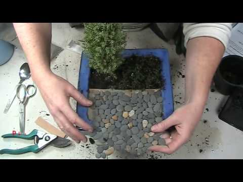 How to Make a Garden in Miniature with a Mini Patio, Long Lasting, Realistic and Easy to Grow