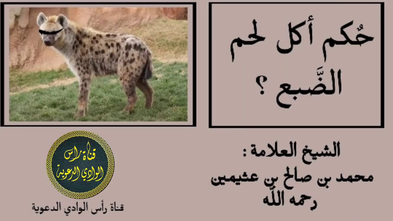 حكم أكل لحم الضبع الشيخ محمد بن صالح بن عثيمين رحمه الله Youtube