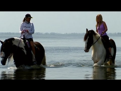 C Ponies | Horseback Riding on the Beach in Tampa Bay, Florida