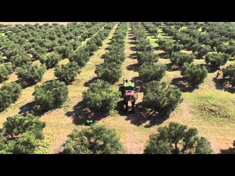 Yanni's Olive Grove - Παρουσίαση