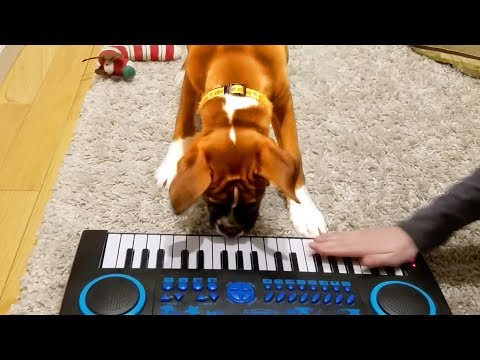 Animals Got Talent!! Smart and Talented Animal Videos