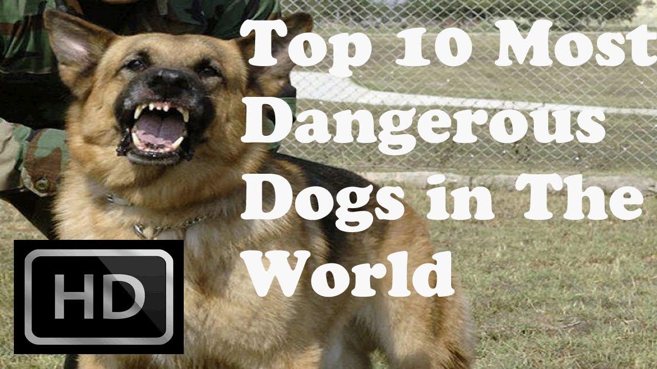 Top 10 - Most Dangerou...