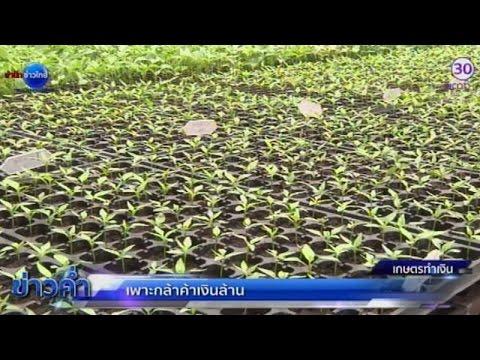 เกษตรทำเงิน : เพาะกล้าค้าเงินล้าน