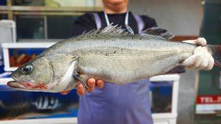 빵 좋고 살에 무지개 빛 도는 농어 회뜨기 , sea bass , 農魚 , すずき