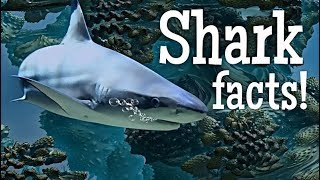 Shark Facts for Kids | Classroom Edition Sharks Learning Video