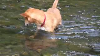 川の中で顔を付けて、川底のものを拾おうとしたのは、ジュニアより太郎...