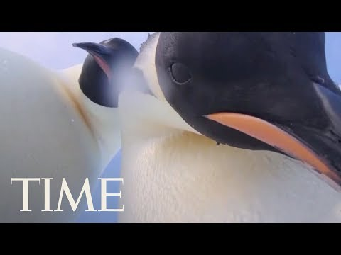 Everyone Loves These Penguins In Antarctica Who Have A Better Selfie Game Than You Do | TIME