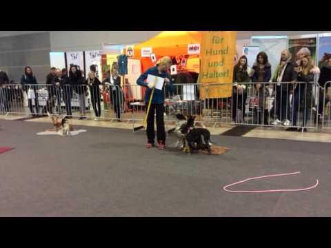 Trickdog Show Live auf der Animal Messe in Stuttgart