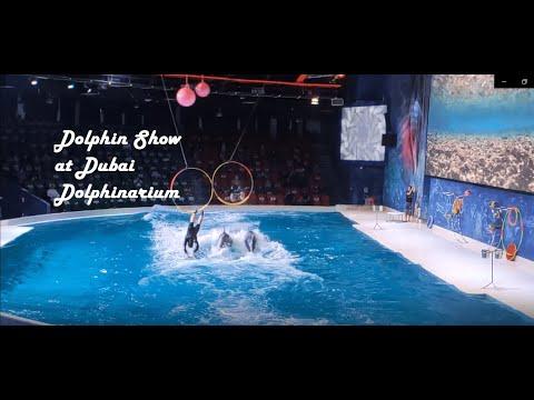 Dolphin show in Dubai Dolphinarium