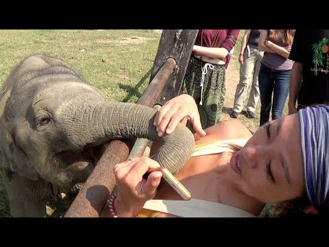Baby Elephant playing with Girl