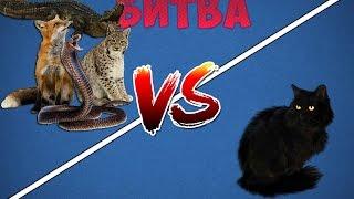 БИТВА! Кошки против разных животных.