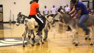 Diving For Dollars- Fun Games To Play While Riding a Donkey!