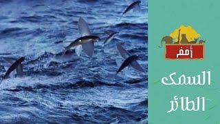 Omam | امم | السمك الطائر