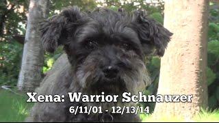 Goodbye, Xena Warrior Schnauzer